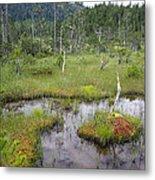 Muskeg Bog With Ponds, Mitkof Island Metal Print