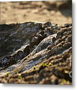 Mussels Sunset Metal Print