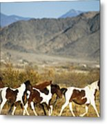 Mustangs Metal Print by Mark Newman and Photo Researchers