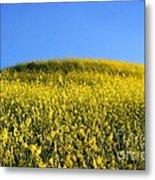 Mustard Grass Metal Print