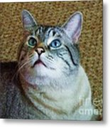 My Beautiful Blue Eyed Tiger Boy Metal Print