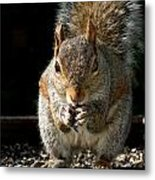 My Bird Feeder Metal Print