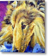 My Blue Teddy - Shetland Sheepdog Metal Print by Lyn Cook