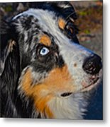 My Brown Eyes Blue Metal Print