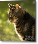 My Cat Metal Print
