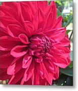 my favorite Dahlia Metal Print