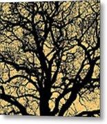 My Friend - The Tree ... Metal Print