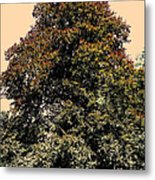 My Friend The Tree Metal Print