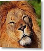My Funny Face Metal Print