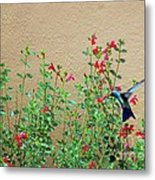 My Little Hummingbird Metal Print