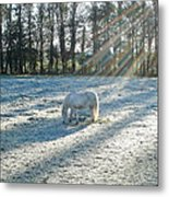 My Lovely Horse Metal Print