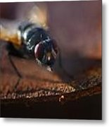 My My My Little Fly Metal Print