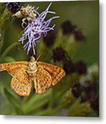 My National Geographic Moment Metal Print