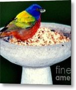 My Painted Bunting Metal Print