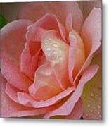 My Pink Rose Metal Print