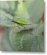 My Pretty Green Stink Bug Metal Print