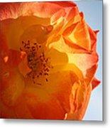 My Yellow Orange Rose Metal Print