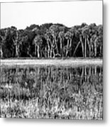 Myakka River Wilderness Metal Print