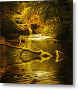 Mystery In Forest Metal Print