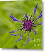 Mystery Wildflower 1 Metal Print