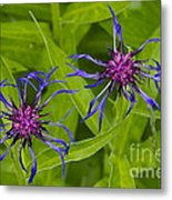 Mystery Wildflower 2 Metal Print by Sean Griffin