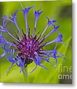 Mystery Wildflower 3 Metal Print by Sean Griffin