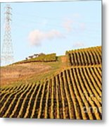 Napa Valley Vineyard . 7d9066 Metal Print