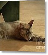 Naping In The Shade Metal Print