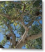 Naples Tree Metal Print