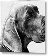Napoleon Mischief Dog Portrait  Metal Print