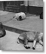 Napping Friends In Valparaiso Metal Print by Camilla Brattemark