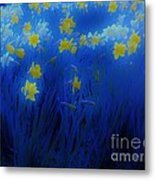 Narcisos Metal Print by Xoanxo Cespon