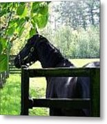 National Stud Farm Ireland Metal Print