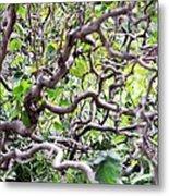 Natural Abstract 3 Metal Print