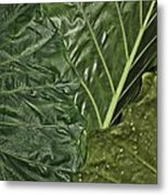 Natural Abstract 39 Metal Print