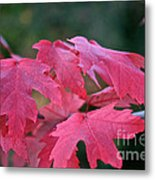 Naturally Vibrant Metal Print