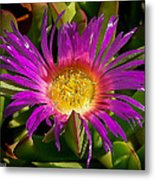 Nature Aglow Metal Print