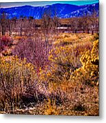 Nature At It's Best In South Platte Park Metal Print