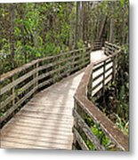 Nature Walk Metal Print