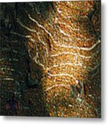Nature's Abstractions IIi Metal Print