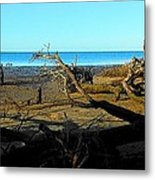 Natures Art Gallery Tn Metal Print