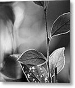 Natures Back Light Metal Print