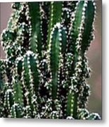 Nature's Cactus Abstract 2 Metal Print