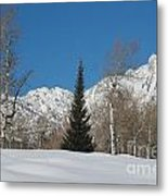 Nature's Christmas Tree Metal Print