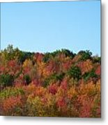 Natures Colors Metal Print