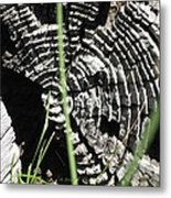 Nature's Creativity Metal Print