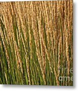 Nature's Own Gold Metal Print