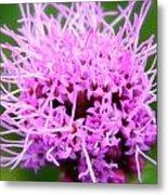Natures Purple Metal Print