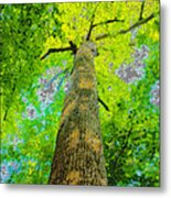 Natures Skyscraper Metal Print