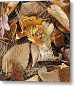 Nature's Still Life 1 Metal Print